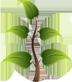 young living vzgoja rastlin